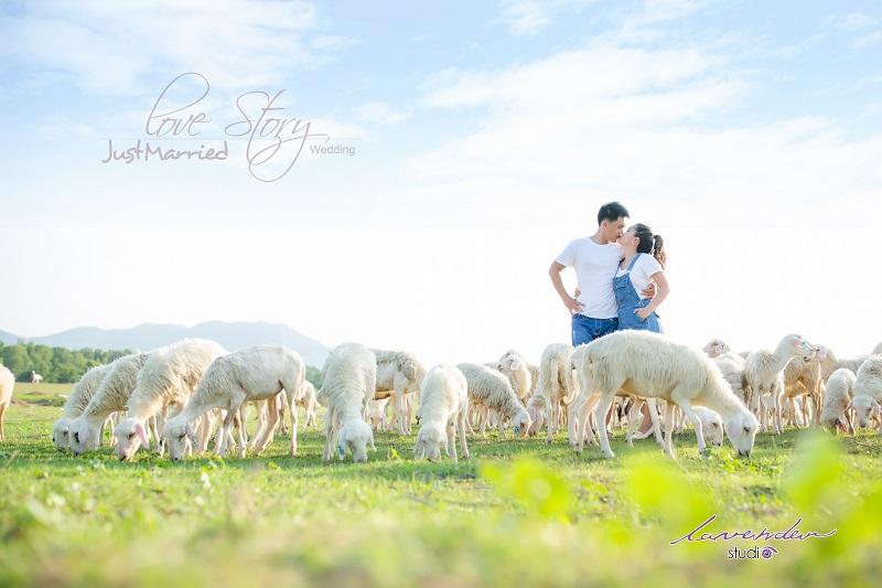 Phim trường chụp hình cưới tại Vũng Tàu lavender studio