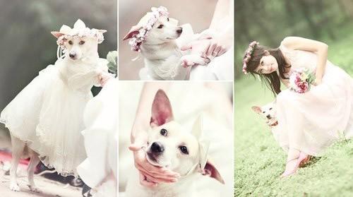 chụp hình cưới đẹp cùng thú cưng