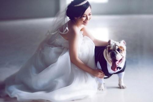 studio chụp hình cưới đẹp cùng thú cưng đẹp
