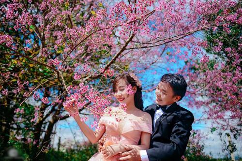 chụp ảnh cưới hoa anh đào