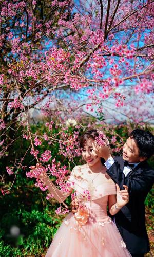chụp ảnh cưới mùa hoa anh đào