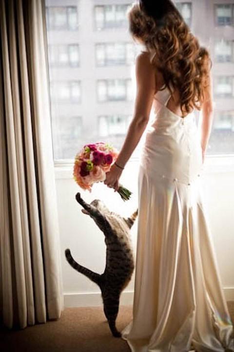 chụp hình cưới cùng thú cưng báo giá
