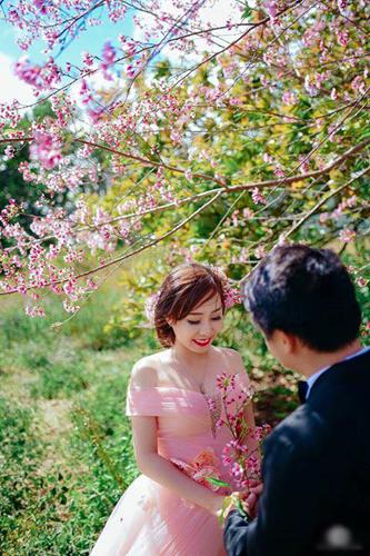 chụp hình cưới mùa hoa anh đào