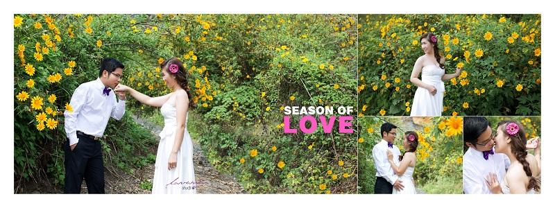 chụp hình cưới mùa hoa dã quỳ