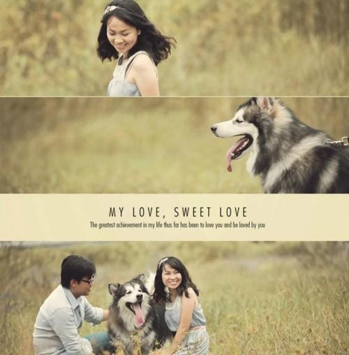 studio chụp hình cưới đẹp cùng thú cưng đẹp tphcm